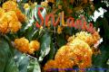 Royal Botanic Gardens Sri Lanka6
